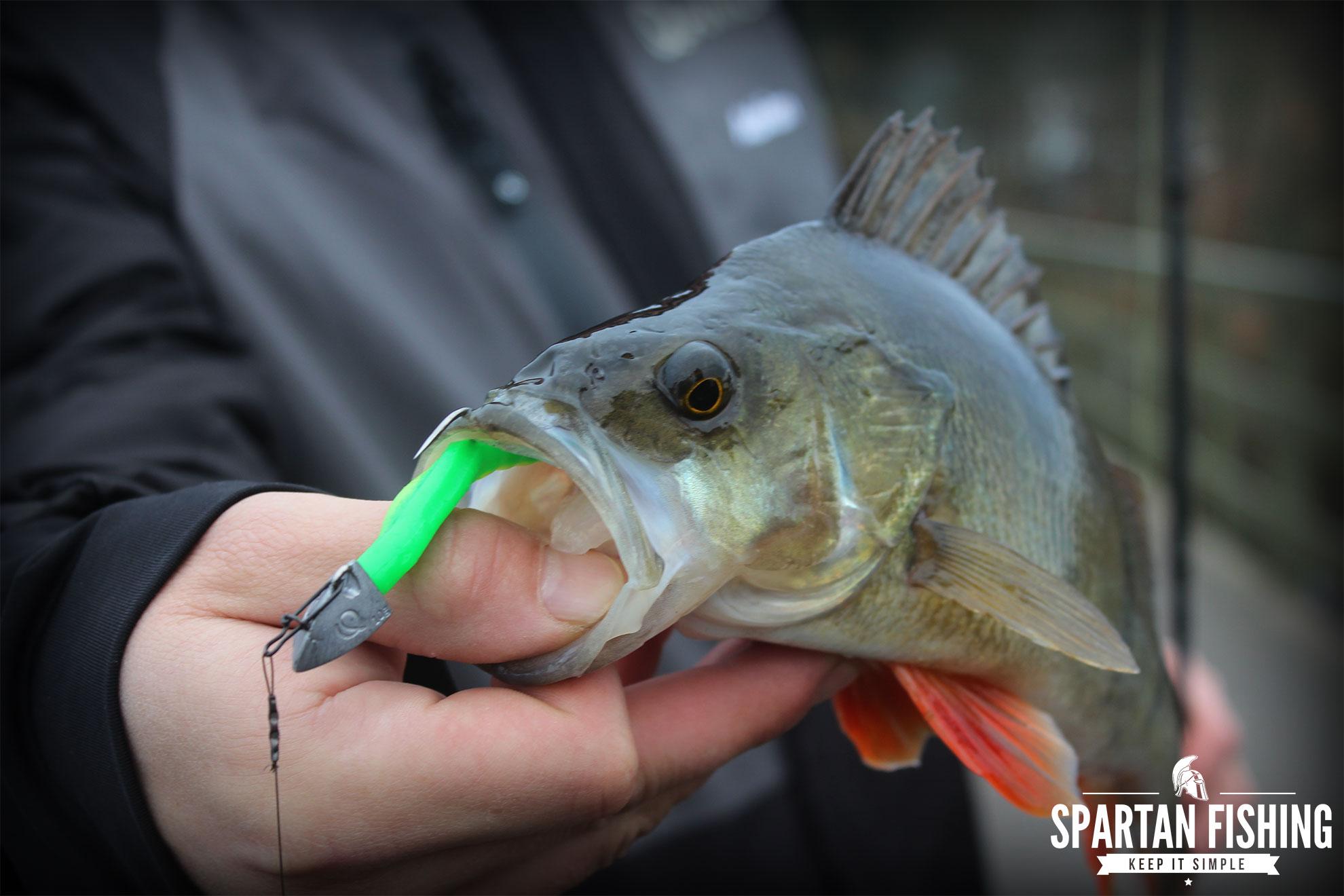 Erfolgreich auf Raubfisch im kleinen See!