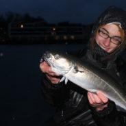 Mit leichtem Gerät auf Köhler – Streetfishing bei Nacht!
