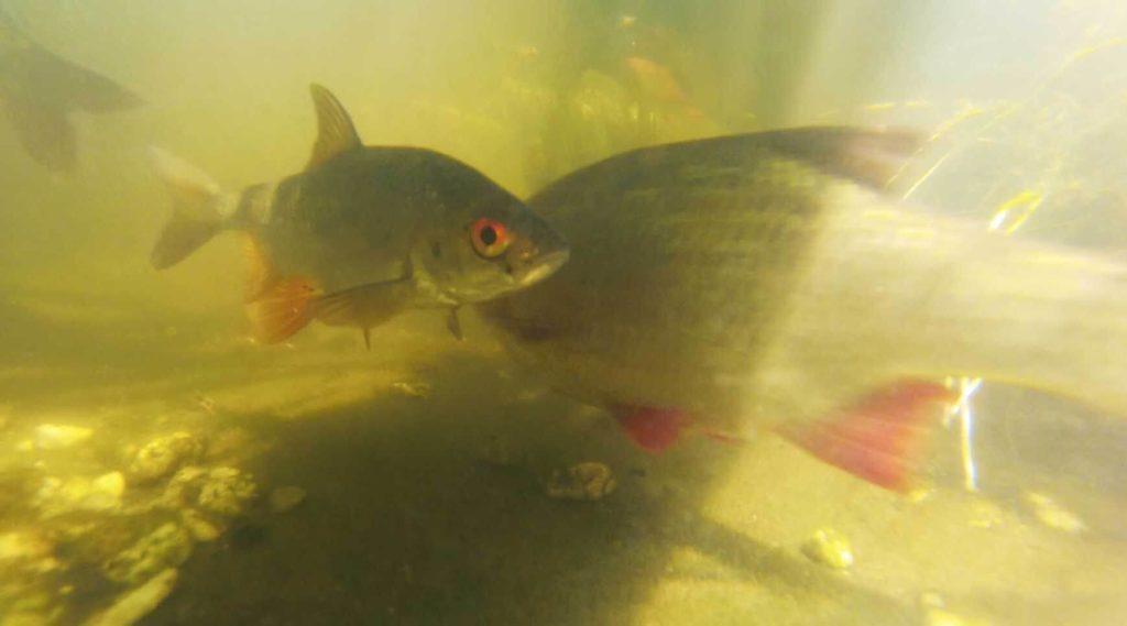Friedfische Hecht Angeln
