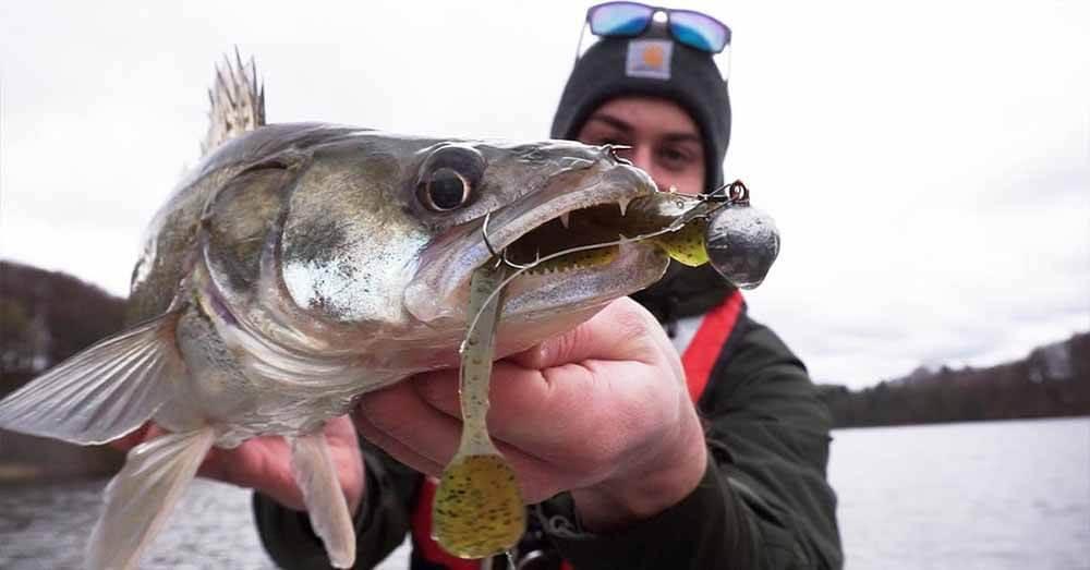 Fisch Raubfisch